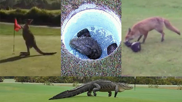 Best golf course animal encounters of 2015